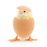 Chicken And An Egg Shell Stock Photo