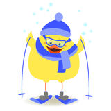 Chicken athlete Chicken skiing in winter clothes Vector Royalty Free Stock Photography