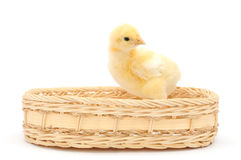 Chicken in basket Stock Image