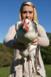 Chicken being hold by girl. Girl holding out Sussex-Light chicken Stock Photography