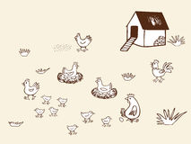 Chicken bio farm in countryside. Royalty Free Stock Photo