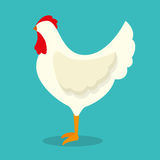 chicken bird animal farm Stock Photos