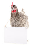 Chicken with blank Stock Photo