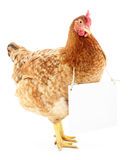 Chicken with blank Royalty Free Stock Photo