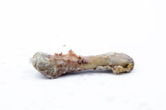 Chicken bone. Isolated Over White background stock images