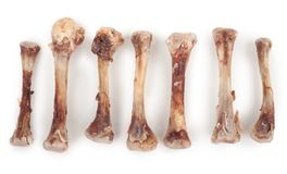 Chicken bones. On white background stock image