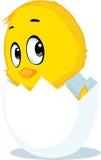 Chicken born from eggshell - vector illustration Stock Photos