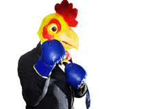 Chicken boxing in a suit isolated. Chicken with business suit fighting his fustrations isolated Royalty Free Stock Photos