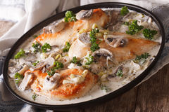 Chicken breast with mushrooms in cream sauce close-up. Horizonta Stock Images