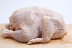 Chicken-broiler Royalty Free Stock Photo