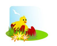 Chicken in a broken egg, cdr vector. Illustration with a chicken in a broken red easter egg, flowers and grass, cdr vector vector illustration