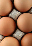 Chicken brown egg Royalty Free Stock Image