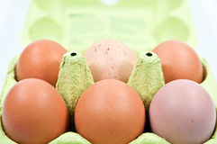 Chicken brown egg. Eggbox with brown chicken eggs Royalty Free Stock Photo