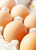 Chicken brown egg Stock Image