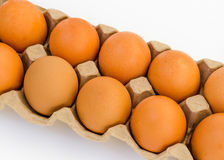 Chicken brown egg closeup Royalty Free Stock Photo