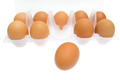 Chicken brown egg closeup view background. Stock Image