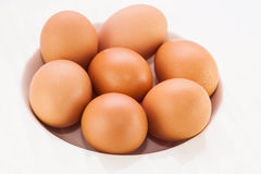 Chicken brown egg isolate background Stock Images