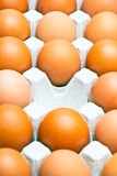 Chicken brown eggs Royalty Free Stock Images