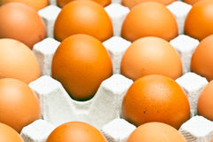 Chicken brown eggs Stock Photography