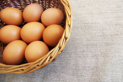 Chicken brown eggs Stock Photos