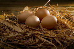 Chicken brown eggs in nest. Four chicken brown eggs in a straw nest royalty free stock images