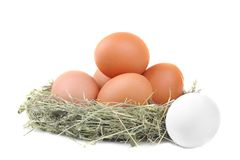 Chicken brown eggs in a nest of grass. Isolated. Chicken brown eggs in a green nest of grass. Isolated stock photo