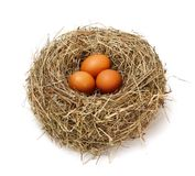 Chicken brown eggs in nest. Three brown chicken eggs in real hay nest stock photo