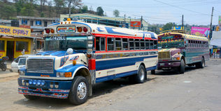 Chicken buses Stock Image
