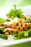 Chicken Caesar salad. On the white plate Royalty Free Stock Photography