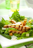 Chicken Caesar salad. On the white plate Stock Image