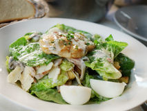 Chicken Caesar Salad Stock Photography