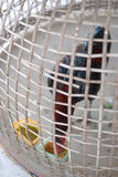Chicken in cage waiting for food in farm Stock Image