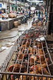 Chicken in cages at a market in Yunnan Stock Photos