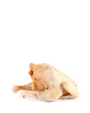 Chicken carcass  Royalty Free Stock Images