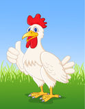 Chicken cartoon with thumb up Stock Photos