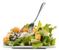 Chicken ceasar salad isolated Royalty Free Stock Photo