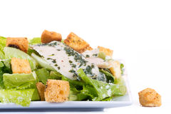 Chicken ceasar salad isolated Stock Photography