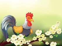 A chicken in a cherry blossom tree. Illustration of a chicken in a cherry blossom tree Stock Images