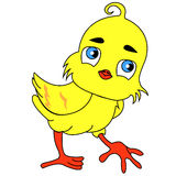 Chicken. Chick. Easter chick congratulates Easter. Baby card Royalty Free Stock Image