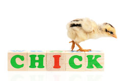 Chicken Royalty Free Stock Image