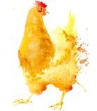 Chicken. Chicken watercolor. Royalty Free Stock Image