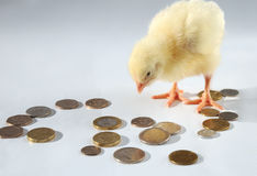 Chicken and coins Royalty Free Stock Photos