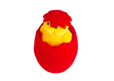 Chicken coming out Royalty Free Stock Photography