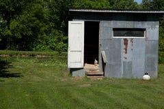Chicken Coop. A chicken in the doorway of a chicken coop Stock Image