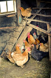 Chicken coop Stock Photo