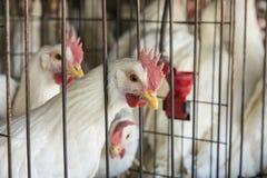 Chicken Coop Stock Images