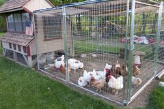 Chicken coop Stock Images