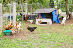 Chicken coop Royalty Free Stock Images