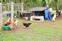 Chicken coop Stock Image