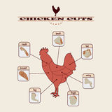 Chicken cuts. Info graphic of the chicken cuts on light background Stock Photo